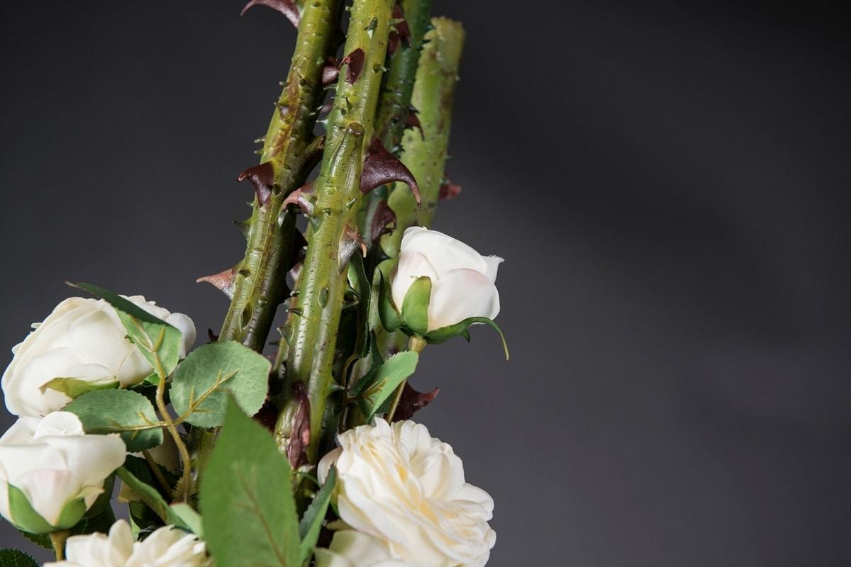 Eternity Penelope Column Roses, Floral arrangement on glass vase