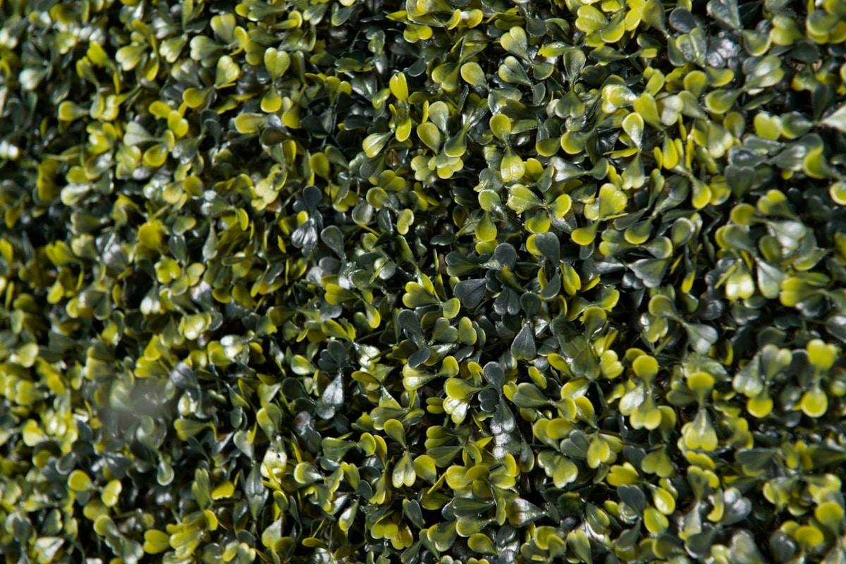 Bosso, Synthetic hedge, weatherproof