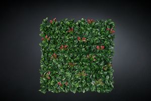 Photinia, Artificial hedge